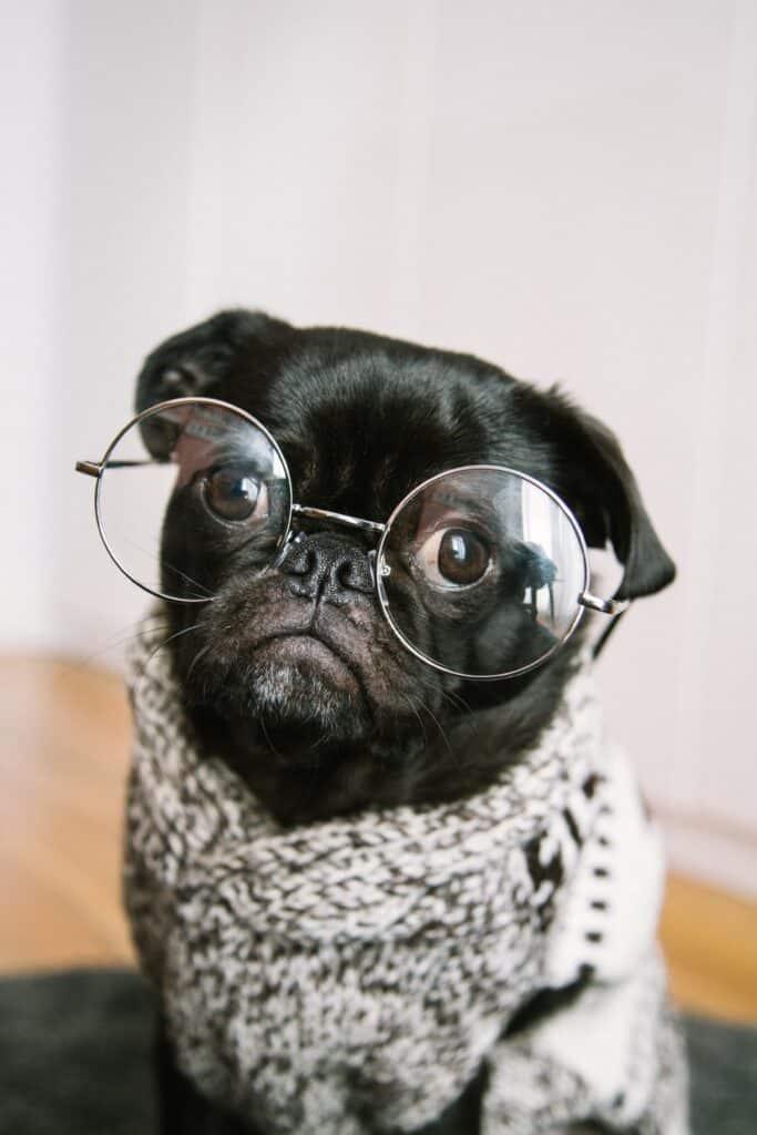 cute-dog-wearing-specs